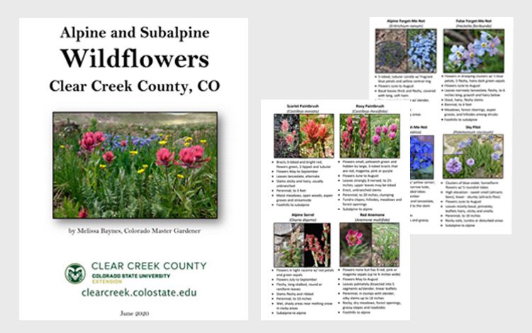 Wildflower guidebook cover with sample pages