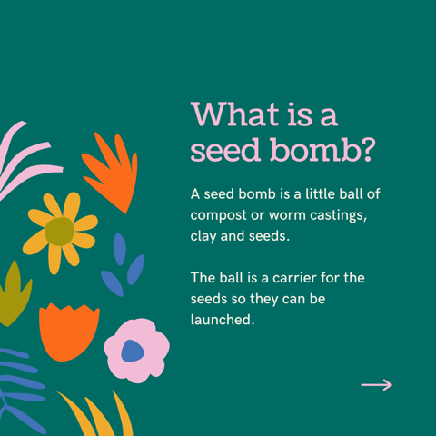 What is a seed bom? A little ball of compost or worm castings, clay and seeds. The ball is a carrier for the seeds so they can be launched