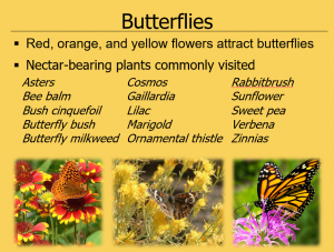 High elevation plant list for butterfly habitat
