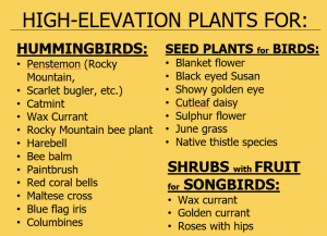 High elevation plant recommendations for birds